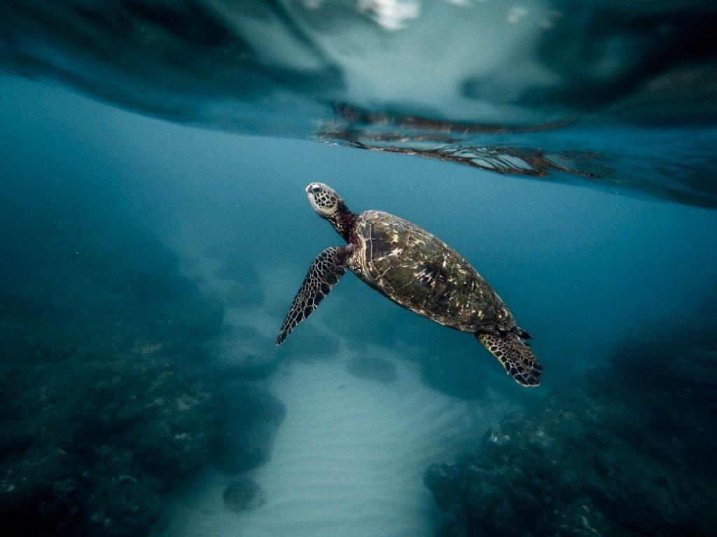 snorkelen bij Curaçao
